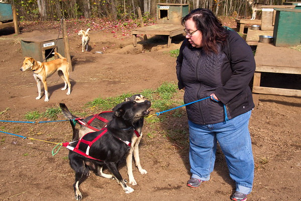 Tracy at Muddy Paws Sled Dog Kennel - October 17th, 2017