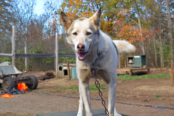 Muddy Paws Sled Dog Kennel - October 17th, 2017