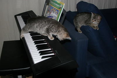 Kitty on the keys by Depussy