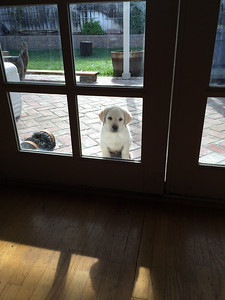 Can i come in? I promise not to pee on the rug!