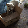 Buy the pup all kinds of nice stuff and all he is interested in is the box it came in.