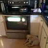My kitchen helper demands treats.