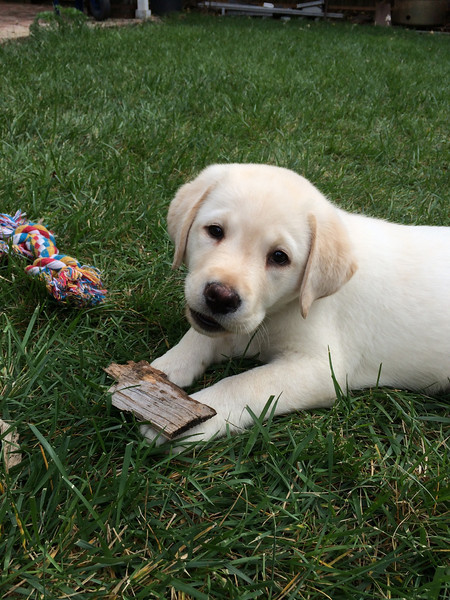 All those toys and all he wants to chew on is wood chips.