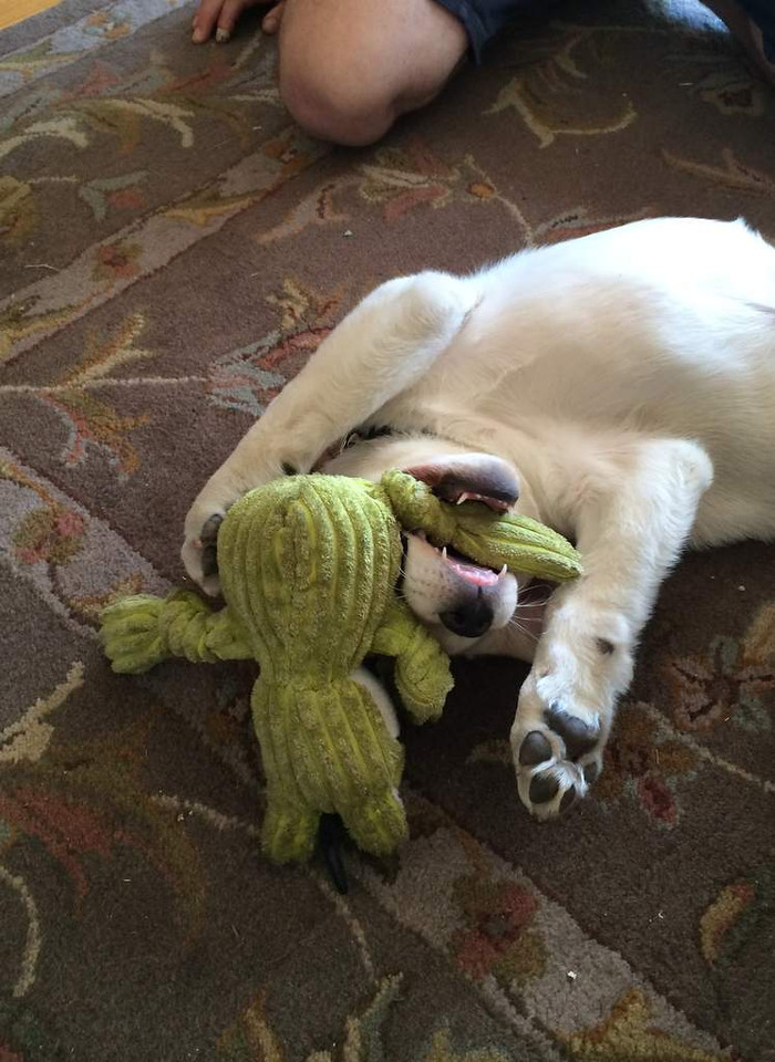 Thor loves froggie