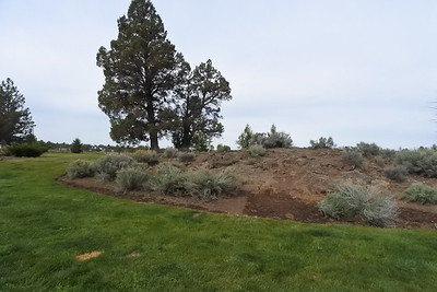 Landscaping - high desert rock and bushes and trees