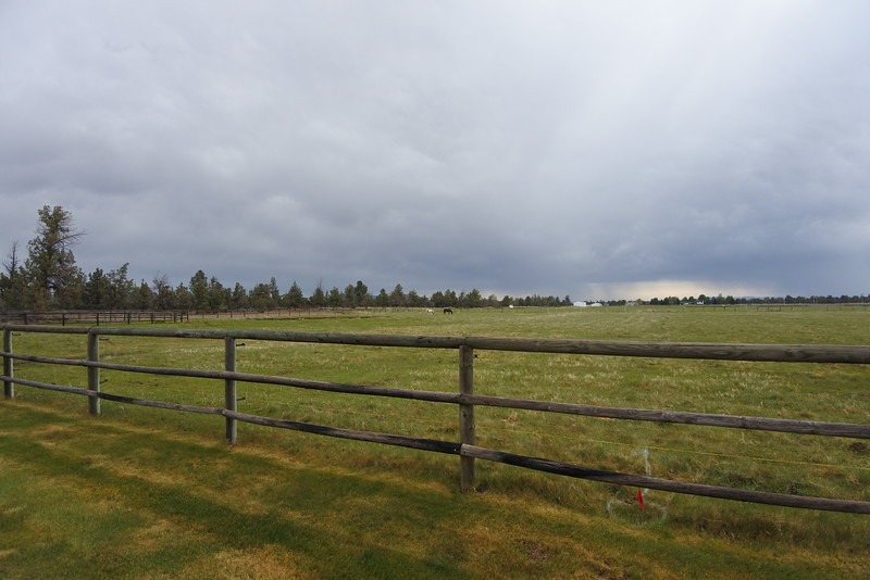 More pasture view - the trees are BLM land.