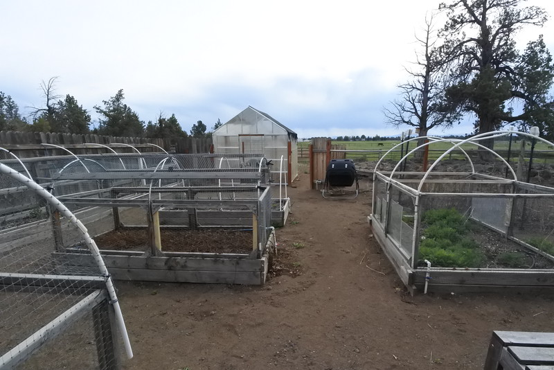 Garden - fully hooked up with the irrigation system and drip lines.
