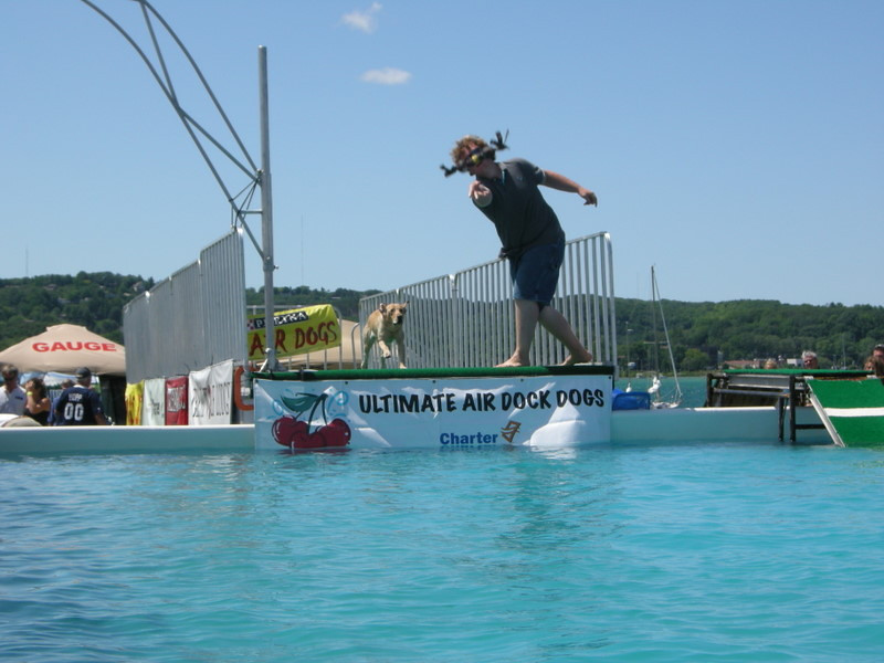 Dock dog jumping - so much fun to watch the happy doggies