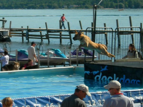 Dog dock jumping competition