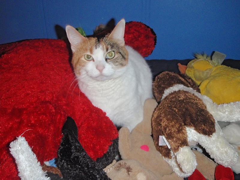 Callie on John's bed.