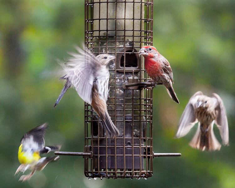 Birdie Central