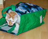You've heard of the Cat in the Hat, well here is the Cat in the Bag - before someone let the cat out of the bag that is.