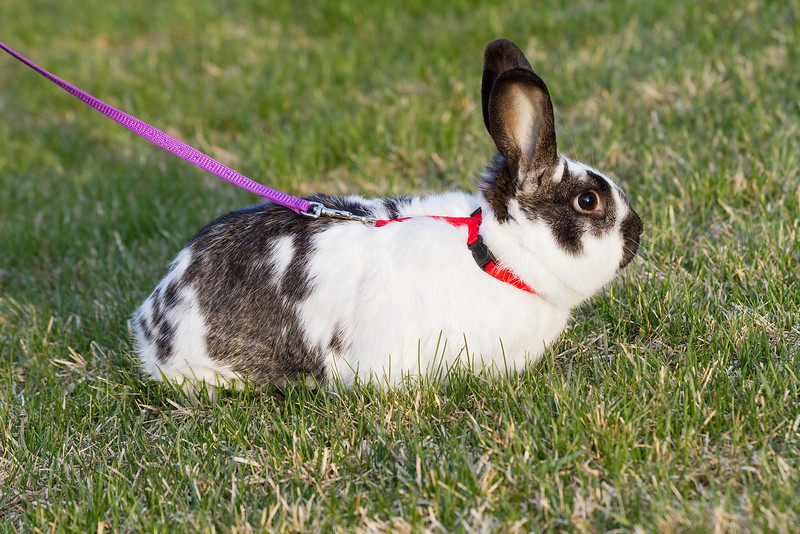 Kinder in the backyard. Im not even going to attempt trying to photoshop out the leash and harness.