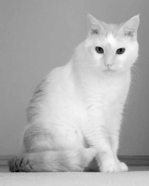 IR image of Spike. She was inside the house (no direct sunlight) but I tried to get a shot anyway. Modified G5.
