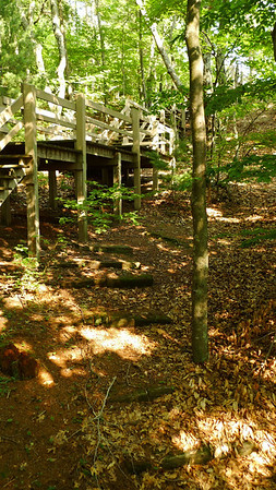 Time to run up Old Baldy, the forested dune behind the campground. Tradition!