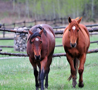 Horses at the ranch  Copyright (C) 2008 Doug Wieringa