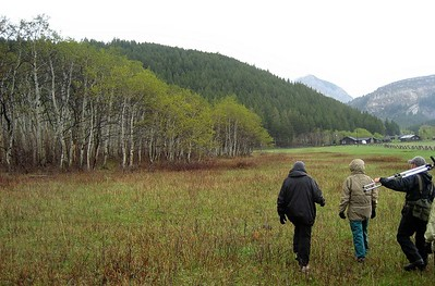 walking near the aspen grove: walking near the aspen grove