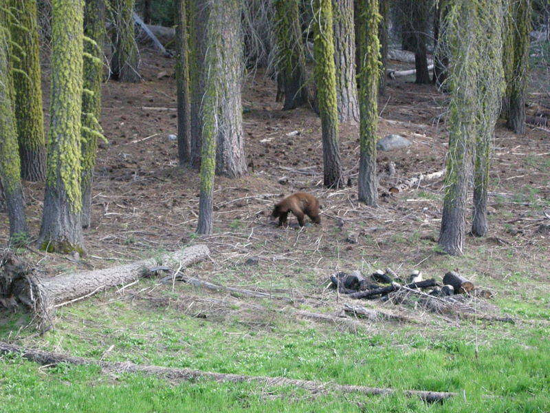 Have you ever asked, Do Bears Poop in the Woods?<br /> <br /> I can now definitively say yes