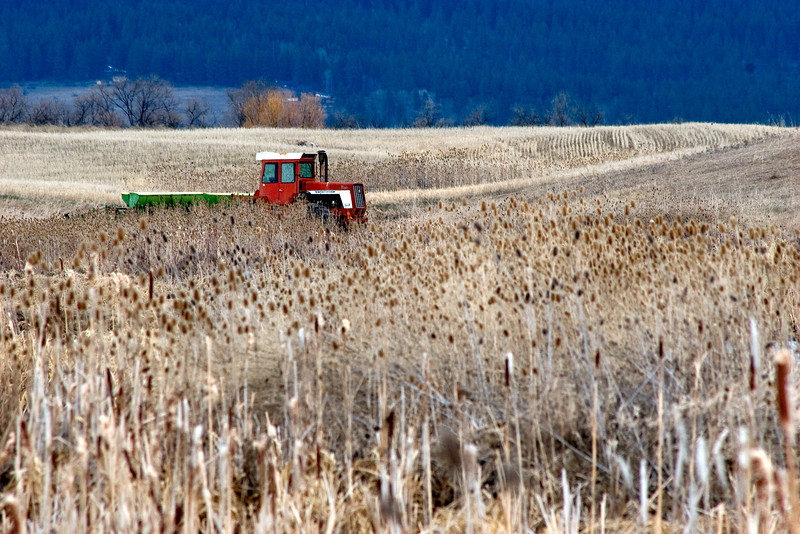 Old farm equipment in the Flathead Valley