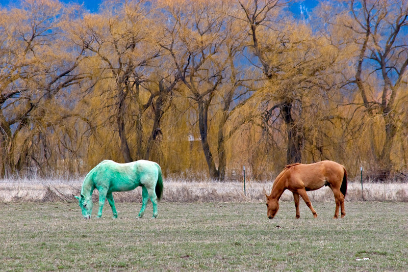 Green horse just after St. Patrick's Day
