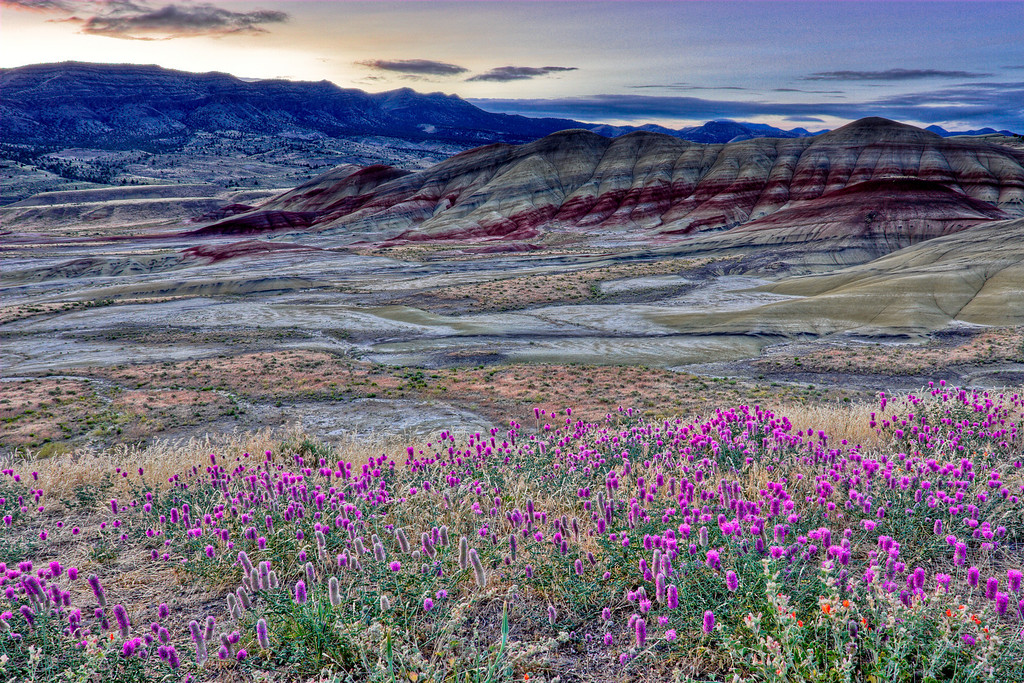 The Painted Hills and wildflowers at sunrise - John Day Fossil Beds, Oregon