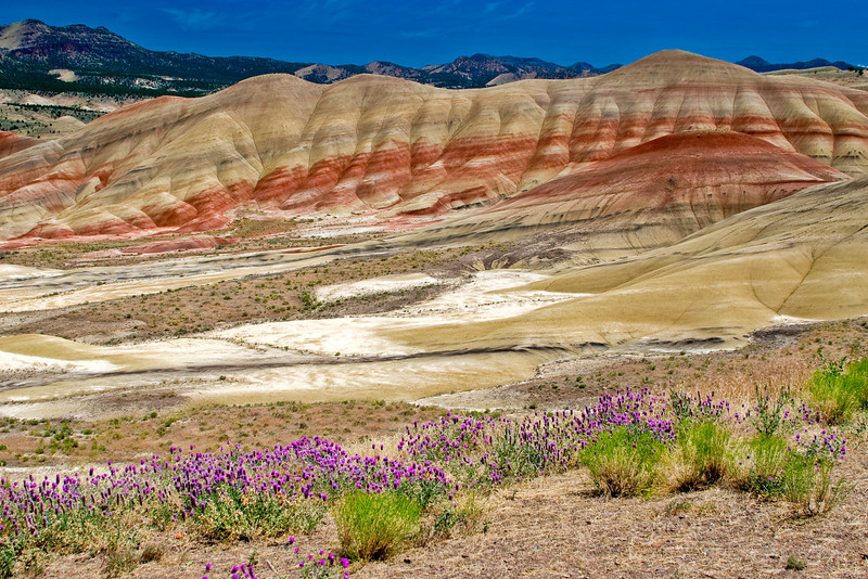 The Painted Hills and wildflowers - John Day Fossil Beds, Oregon