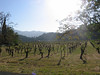 Beautiful wine country