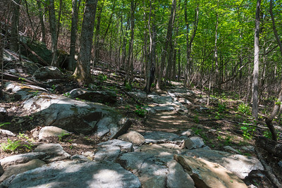 Hike today on Shumont Mountain with Friends of Chimney Rock-15