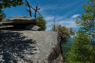 Hike today on Shumont Mountain with Friends of Chimney Rock-31