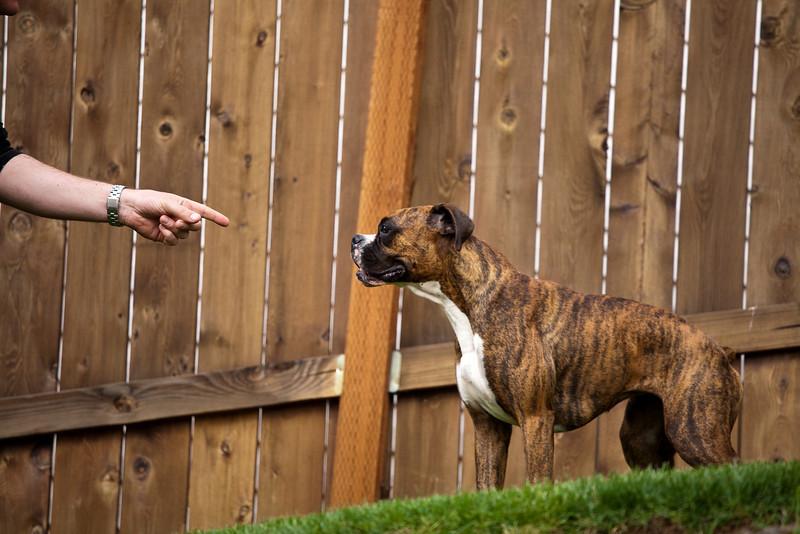 Neighborhood Pics May 2009-24