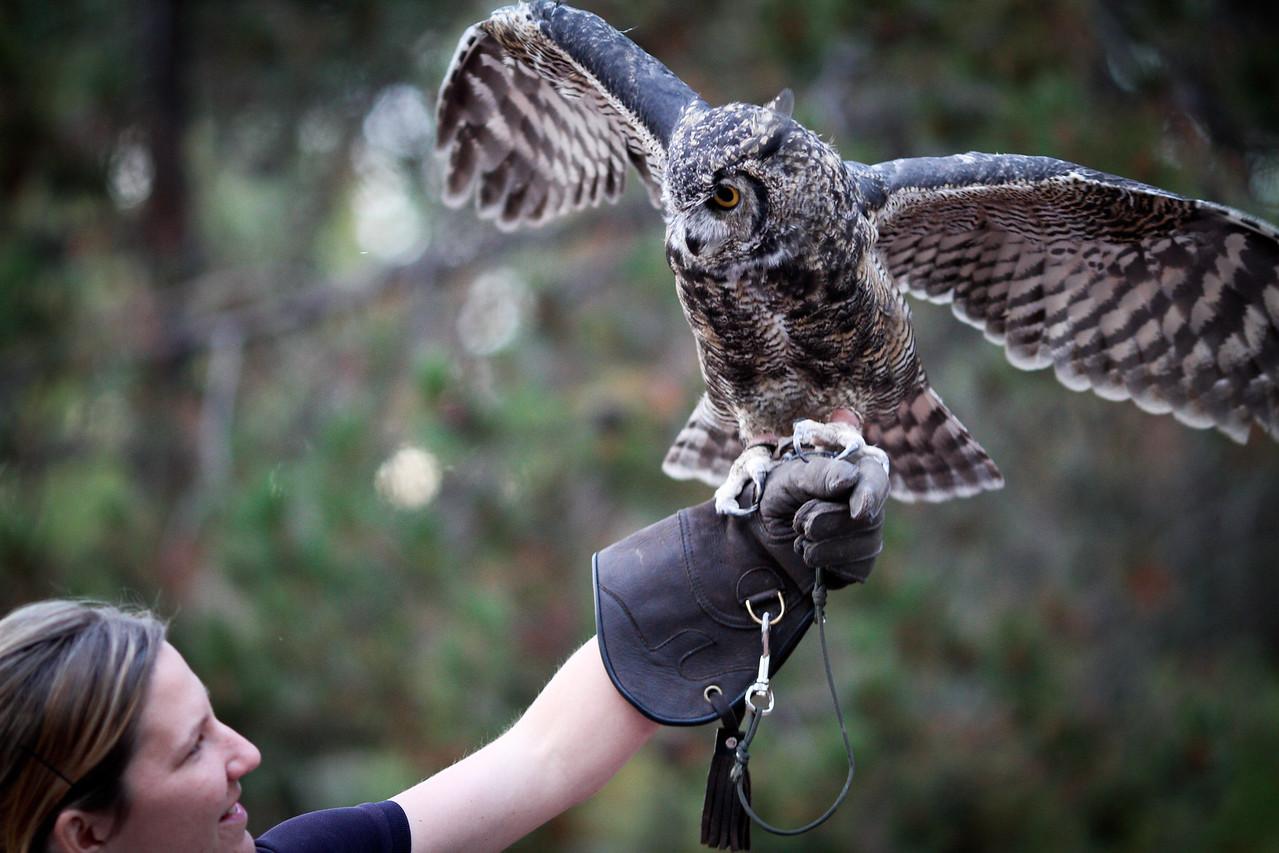 St Francis Owl Program 2011-6