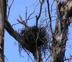 Nests found in the reserve