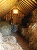 HAY LOFT<br /> Lots of room for hay up here, and whatever that is in the sack on the far wall.