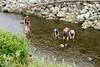050 Prosser Creek