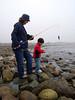 Seaweed Cleanup