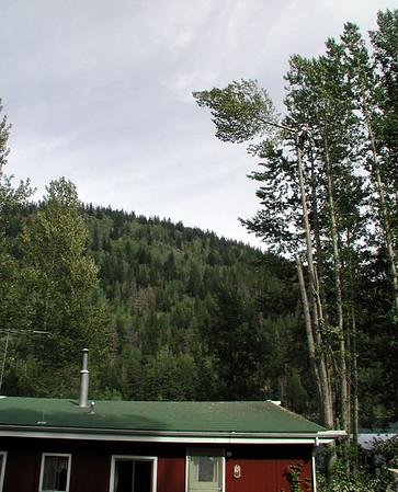 2002 Tree Falling Tyaughton Lake
