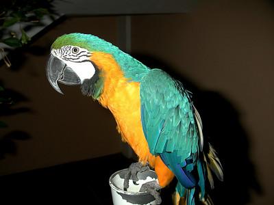 favorite hotel parrot