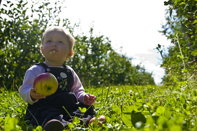 Bowman Orchard-10