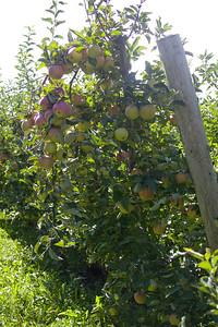 Bowman Orchard-17