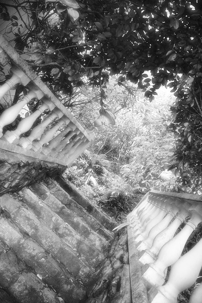 """The steps leading from the driveway up to the garbage bins. (It looks much more exotic than that, doesn't it?)<br /> <br /> The eerie black and white effect is because I processed this picture to look like an infra red photograph. In years gone by you got this effect by purchasing special """"Infra red"""" sensitive film (that had to be kept in a refrigerator so it didn't go off), you then put a filter on the front of your camera (to block out normal wavelengths of light) and you focussed blindly (because you couldn't see through that filter) and then you processed the film in special chemicals. At the end of the day you got a photograph where the sky turned black and foliage turned white. These days you simple take a normal photo and process it with a special """"Infra Red"""" action in a program like Paintshop Pro."""