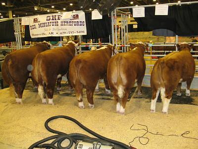 03-11-07 Houston Rodeo_14