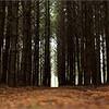 De belles forêts bien humides