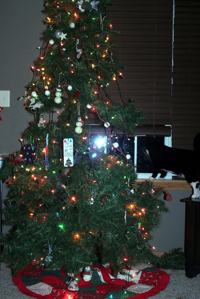 This is what happens to a tree when there is a cat in the family!