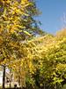 IMG_6300 Stone Mountain GA 2011-11-05
