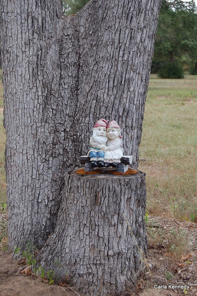 These little Gnomes represent Larry and Silvia  <br /> It was here that Larry proposed.<br /> Pretty cool<br /> Everyone can go aaahhhhh now