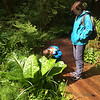 Harry trying to determine if skunk cabbage smells like skunk.
