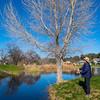 Tree fishing