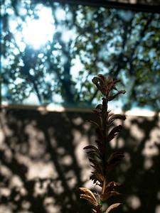 Lights, shadows, plant