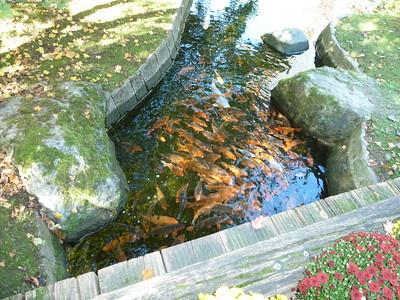De Japanse Tuin in Hasselt is het resultaat van de vriendschapsbanden die de steden Itami en Hasselt sedert 1985 onderhouden.