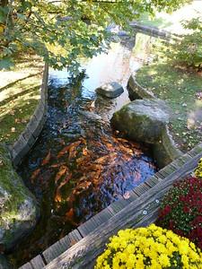 Deze natuurpracht weerspiegelt het Japans landschap van een 17de-eeuwse theetuin. De tuin werd in 1992 aangelegd met hulp van de stad Itami, de Hasseltse partnerstad in Japan.